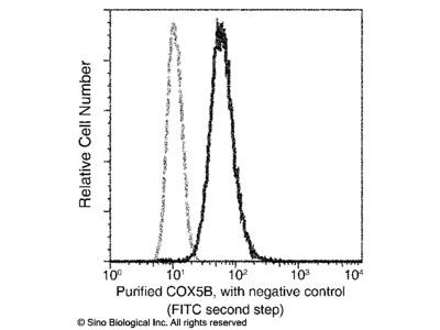 COX5B Antibody, Rabbit MAb
