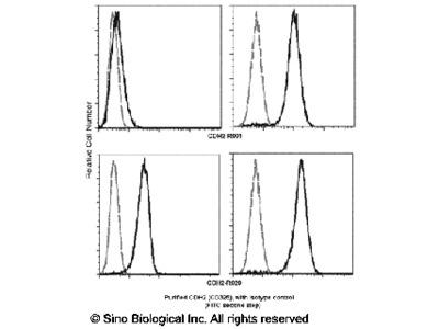 N-Cadherin / CD325 / CDH2 Antibody, Rabbit MAb