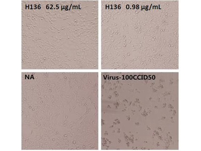 Enterovirus 71 VP1 Neutralizing Antibody