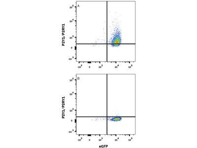 P2Y1 / P2RY1 Alexa Fluor 647-conjugated Antibody