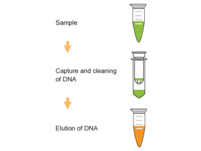 TuMinute PCR Clean-Up Kit