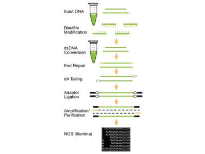 EpiNext Bisulfite Sequencing Kit (Illumina)