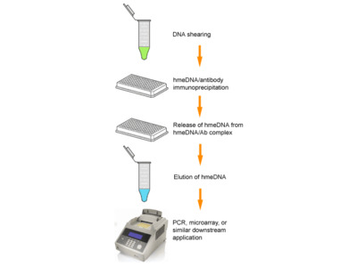 EpiQuik Hydroxymethylated DNA Immunoprecipitation (hMeDIP) Kit