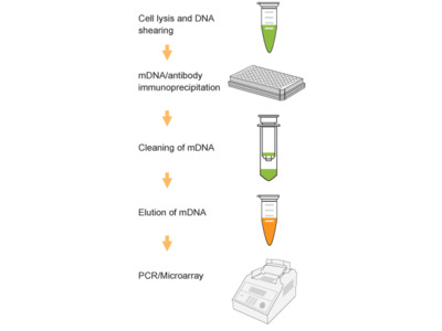 EpiQuik Methylated DNA Immunoprecipitation Kit