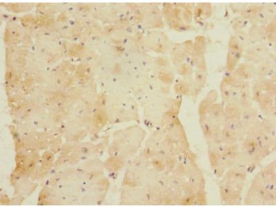 LYRM5 Polyclonal Antibody