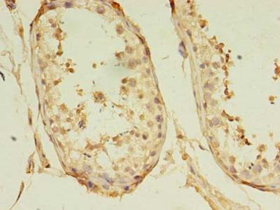 GKAP1 Polyclonal Antibody