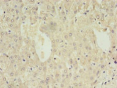 DAO Polyclonal Antibody