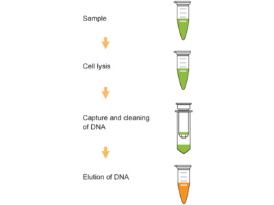 Blood Dna Purification Kits And Reagents Biocompare