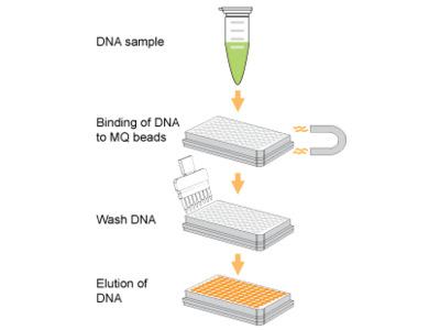 EpiNext DNA Purification HT System