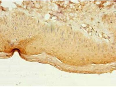 LILRA4 Polyclonal Antibody