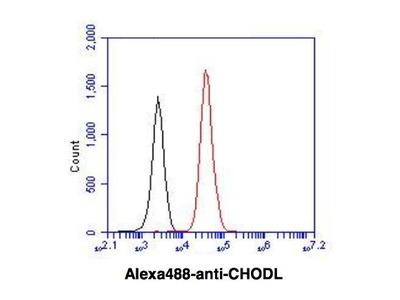 Mouse Anti-CHODL Antibody