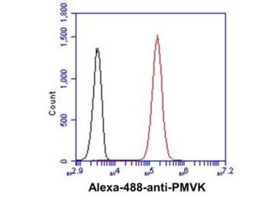 Mouse Anti-PMVK Antibody