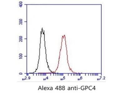Mouse Anti-GPC4 Antibody