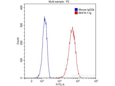 P2RX4 Antibody (1A5A6)