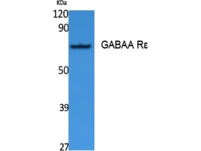 Anti-GABAA R epsilon Antibody