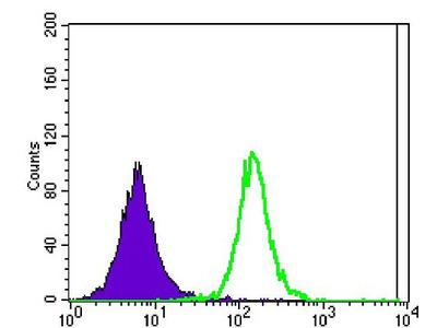 Anti-Ataxin 1 antibody [2F5]