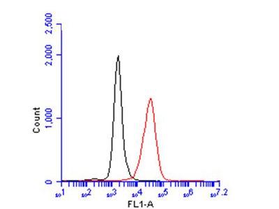 Anti-CD45 antibody [GT0005]