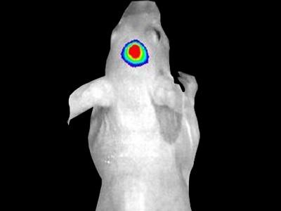 Ivis 174 Spectrum In Vivo Imaging System From Perkinelmer