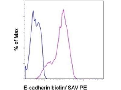 CD324 (E-Cadherin) Monoclonal Antibody (DECMA-1), Biotin, eBioscience™