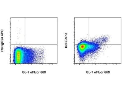 BCL6 Monoclonal Antibody (BCL-DWN), APC, eBioscience™