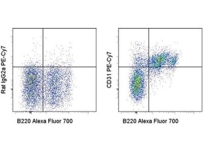 CD31 (PE-Cy7) Antibody
