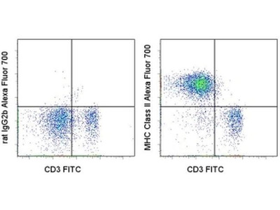 Consistent MHCII Antibody for Flow Cytometry