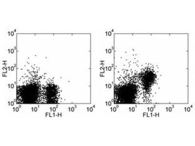 CD28 Monoclonal Antibody (37.51), PE, eBioscience™