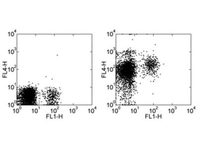 CD184 (CXCR4) Monoclonal Antibody (12G5), APC, eBioscience™