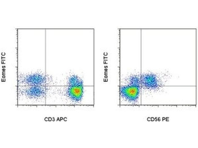 Great EOMES Antibody from Thermo