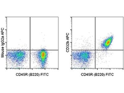 CD32b Monoclonal Antibody (AT130-2), APC, eBioscience™