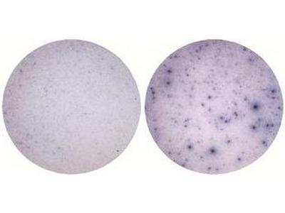 IL-1 alpha Monoclonal Antibody (ALF-161), eBioscience™