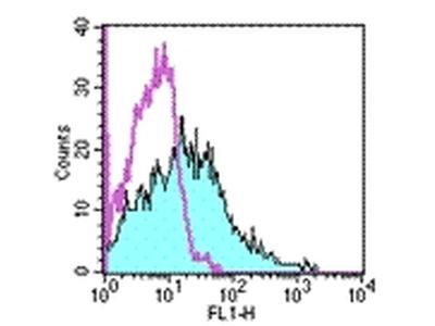 CD107b (LAMP-2) Monoclonal Antibody (M3/84), FITC, eBioscience™