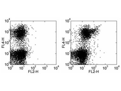 CD133 (Prominin-1) Monoclonal Antibody (13A4), Biotin, eBioscience™