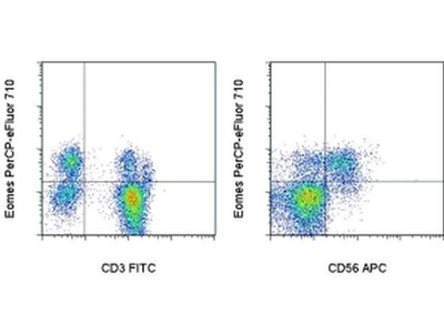 Reliable Antibody to Stain Eomes in CD8 T Cells