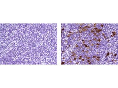 IDO Monoclonal Antibody (V1NC3IDO), eBioscience™