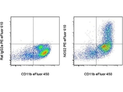 iNOS Monoclonal Antibody (CXNFT), PE-eFluor 610, eBioscience™