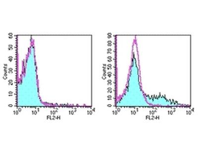 CD153 Monoclonal Antibody (RM153), PE, eBioscience™