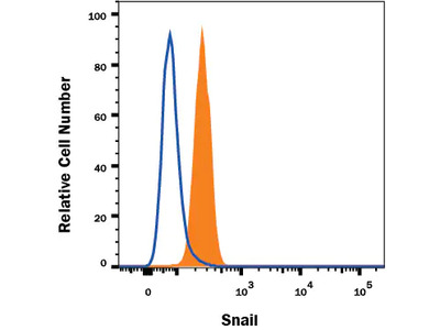 Snail Alexa Fluor 488-conjugated Antibody