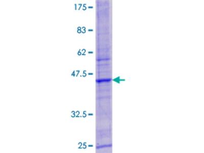 LYSMD3 Protein