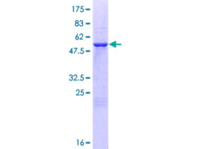 NPL / C112 Protein