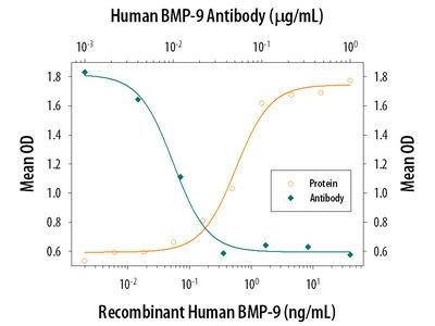 BMP-9 Antibody