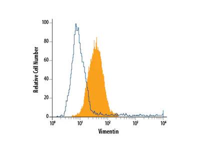 Vimentin PE-conjugated Antibody
