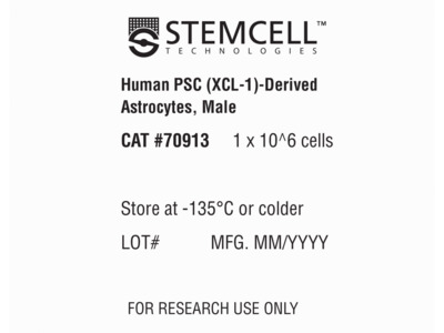 Astrocytes Derived from XCL-1 Human Pluripotent Stem Cells, Male