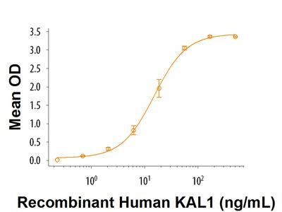 KAL1 Protein