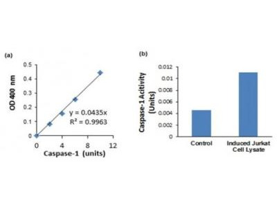 Caspase-1 Kit