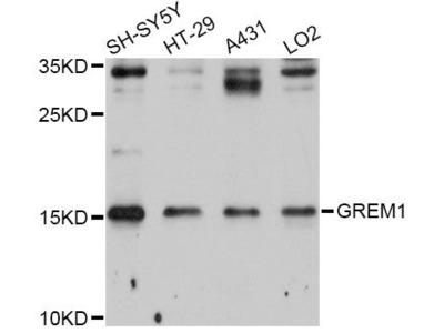 GREM1 Polyclonal Antibody