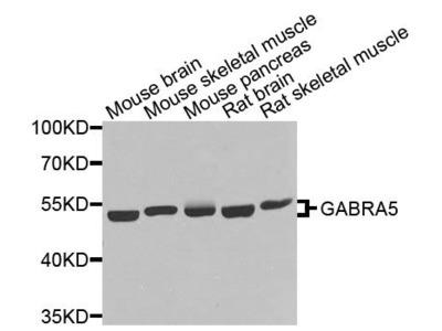 GABRA5 Polyclonal Antibody