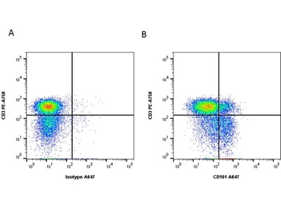 MOUSE ANTI HUMAN CD161 From Bio Rad Formerly AbD Serotec
