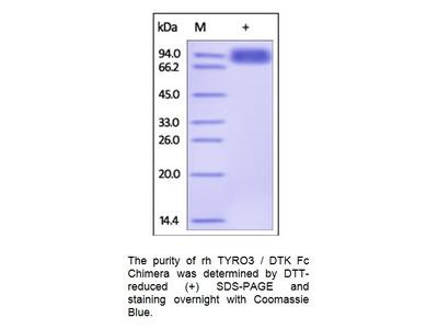 Human CellExp™ TYRO3 / Dtk, Human recombinant