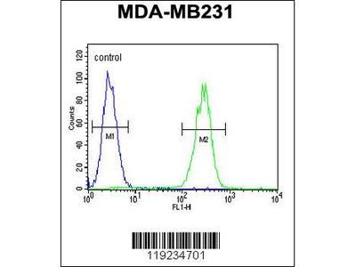 CRHR2 Antibody